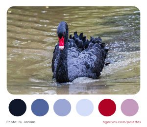 0005-black-swan-colour-palette2.jpg
