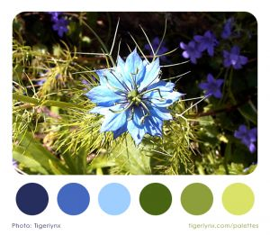 0006-blue-flower-palette2.jpg