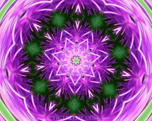 KA0003-purple-kaleidoscope-650.jpg