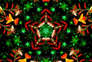 KA0028-orange-kaleidoscope-650.jpg