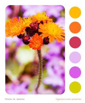 0003-orange-flowers-colour-palette2a.jpg